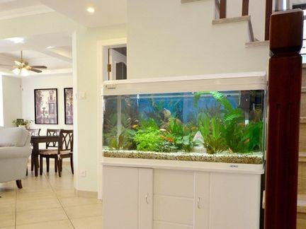 鱼缸图片.jpg